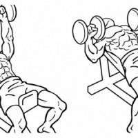Эффективные Упражнения с Гантелями для Начинающих