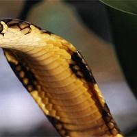 Боязнь Змей – Самая Распространения Фобия