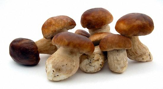 Белые грибы польза и вред