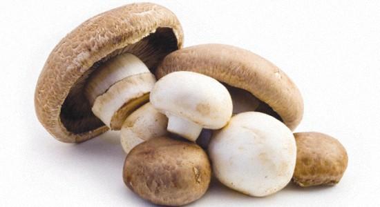 Доказанная польза грибов для здоровья