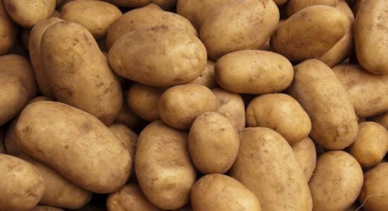 Гмо картофель - Вся правда