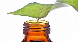 Масло Чайного Дерева - Применение и Противопоказания