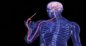 Как Укрепить Вегетативную Нервную Систему