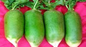 Зеленая Редька, Польза и Вред для Здоровья